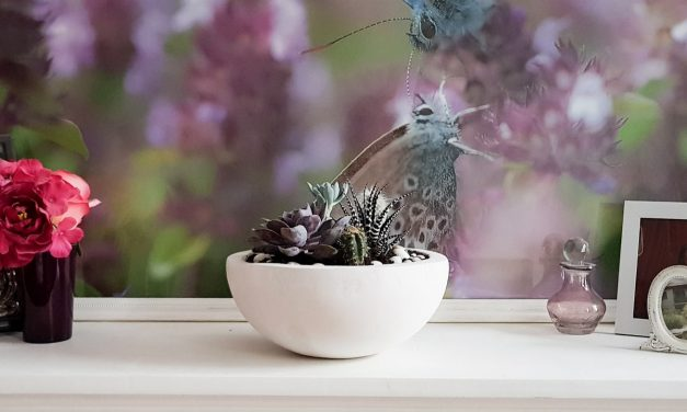DIY Project – Make Your Own Succulent Planter