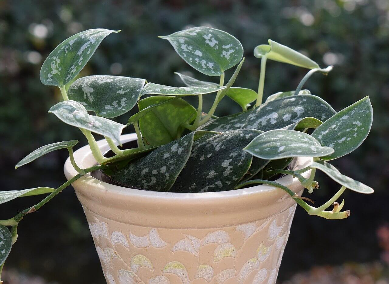 Philodendron | Createbeautifulthings